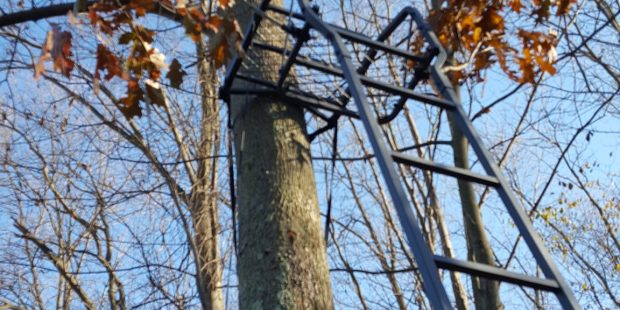 Tree Stand work