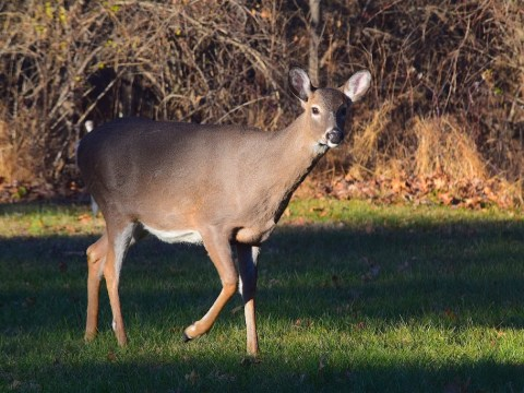 Whitetail Rut-cation 10/25/2018 4