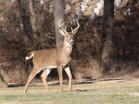 "2018 Whitetail Deer ""Trifecta"" Challenge 1"