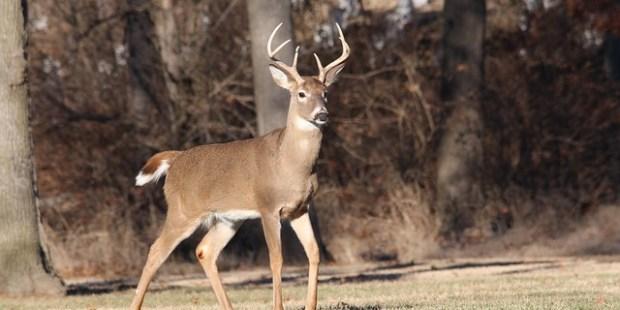 "2018 Whitetail Deer ""Trifecta"" Challenge 1"