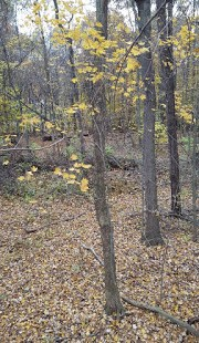 whitetail woods timber view