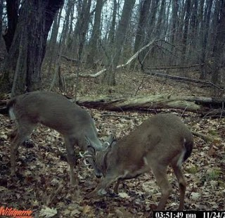4 Tips To Reduce Summer Trail Camera Intrusion 1
