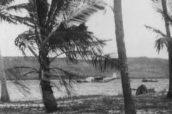 AEUB Camilla moored between trees