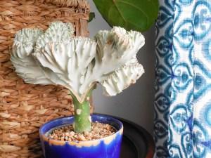 small living room tour via whitneyjdecor.com