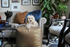 gift ideas for small dogs | gift ideas for puppies | gift ideas for maltipoos | #12daysofgiftguides | dog gift guides | small dog toys for gift
