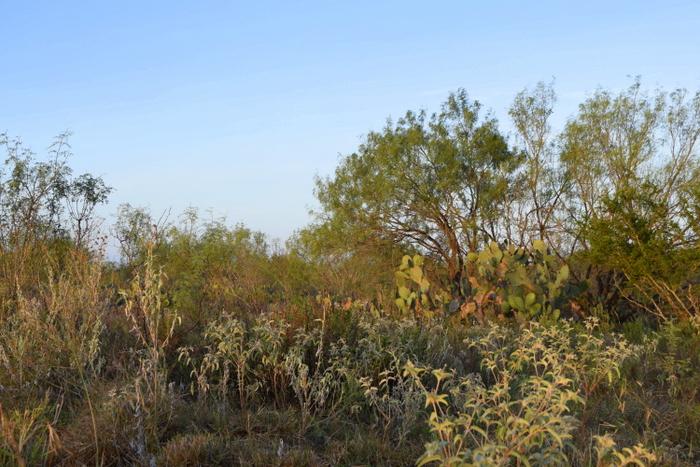 cactus mesquite and croton