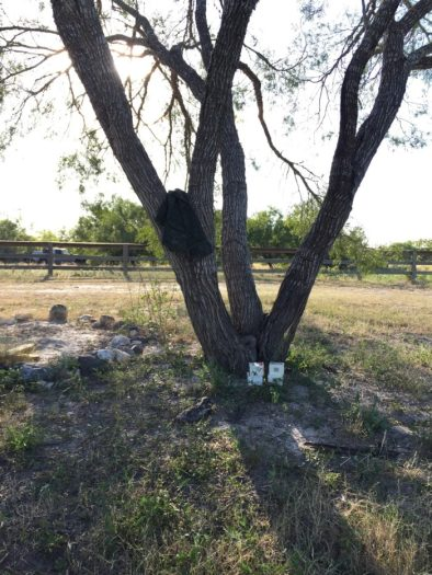 dove hunting in south texas, what to take dove hunting in south texas
