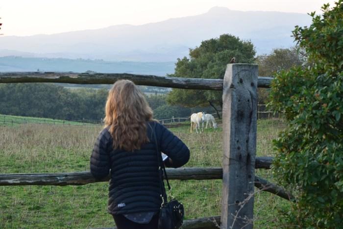 Tuscany countryside La Foce