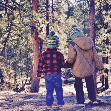Two young boys holding hands in the forest while searching for the perfect Christmas tree.