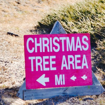 A red sign that says Christmas Tree Area points us in the direction to find the designated Christmas tree forest area in the national forest.