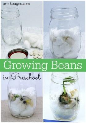 Grow-Beans-with-Preschoolers