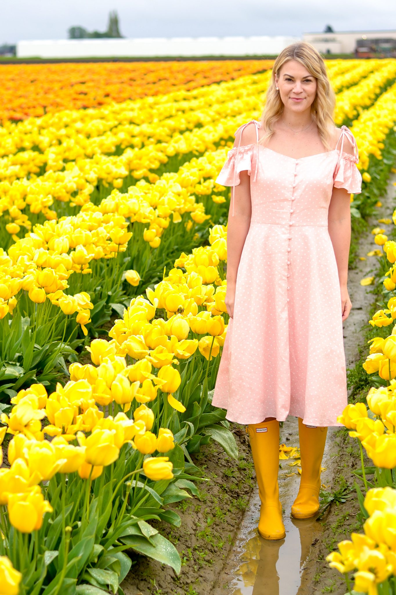 Wandering in the Tulip Fields