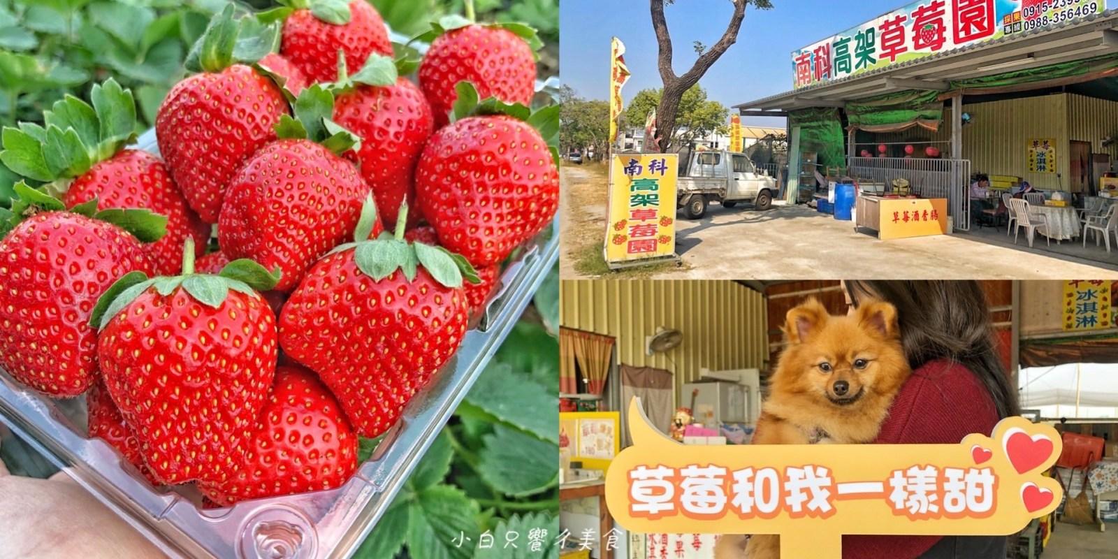 【台南景點】草莓控快來採草莓「南科觀光草莓園」免收門票!草莓休閒觀光/帶小孩的好去處/台南善化採草莓