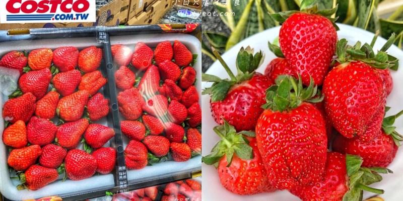 終於買到了!好市多限量開賣「苗栗大湖草莓」草莓大顆又香甜 送女友買這盒就對了
