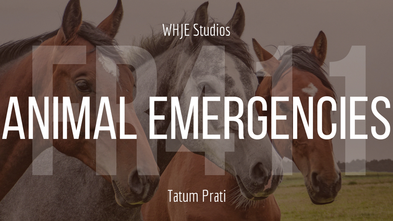 Animal Emergencies – FR411 #17