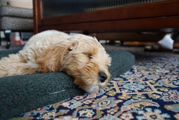 Sleepy Odin