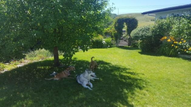 doggies in a yard