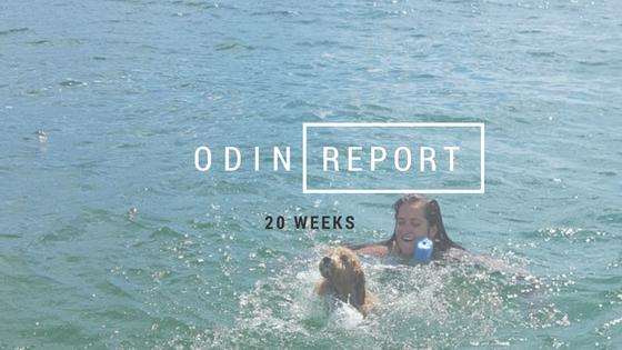 ODIN (2)