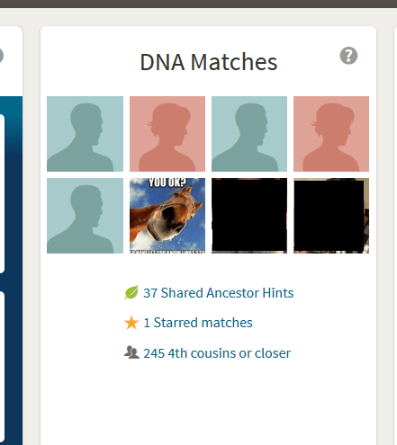 How to Access DNA Matches on Ancestry