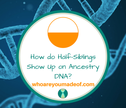 How do Half-Siblings Show Up on Ancestry DNA_