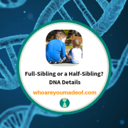 Full-Sibling or a Half-Sibling?  DNA Details