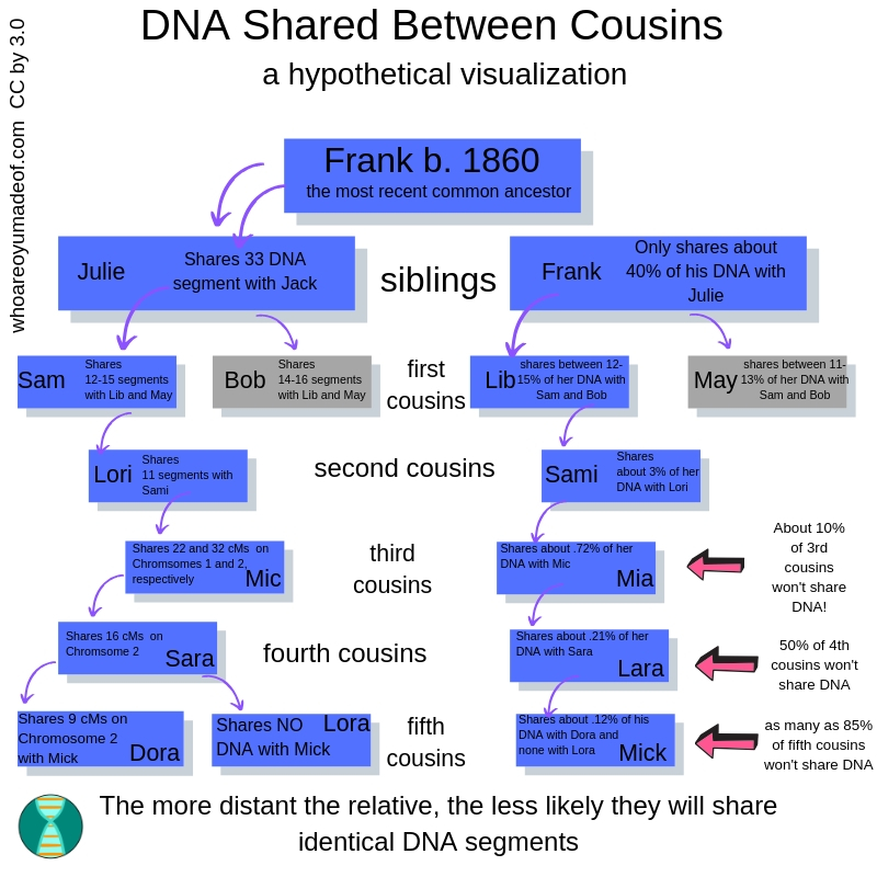 visualization of dna shared between cousins dna segments passed down