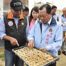 新侍從主義在台灣:「苗栗國」是怎麼來的?