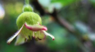 tiny flowers ...
