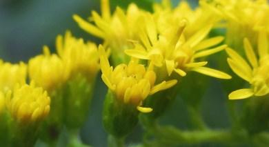Nomatter, .. Beautiful flowers