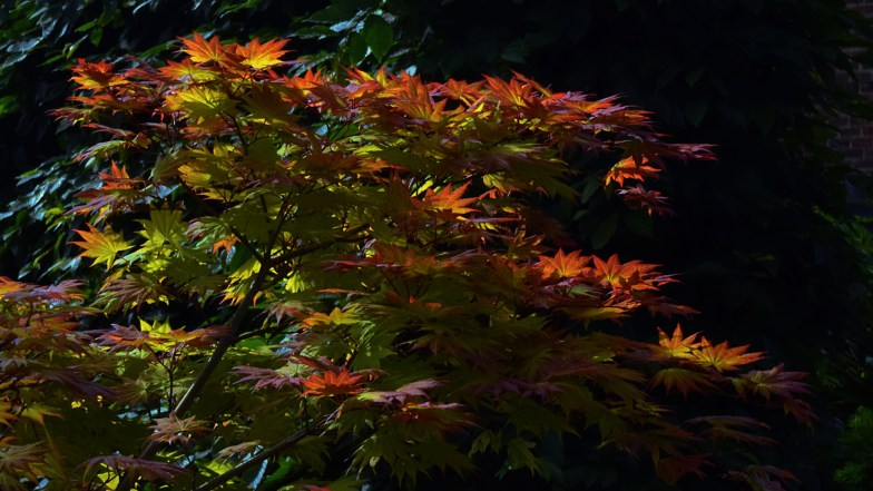 sunny leaves .. (click to enlarge ..)