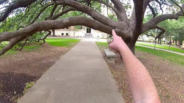 century-tree