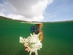 snorkeling-gulf-of-mannar-rameswaram