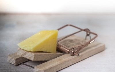 Will Cheese Make Me Fat?