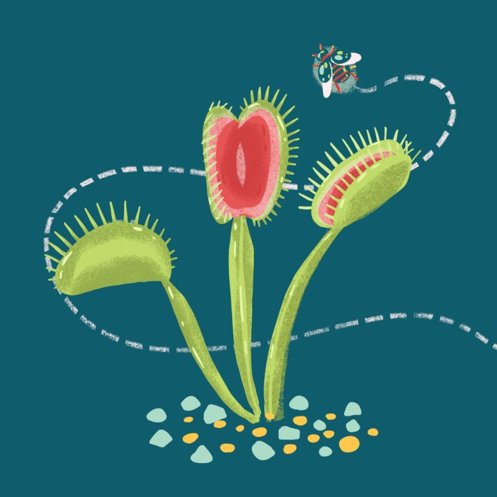 Image result for ted ed carnivorous plants
