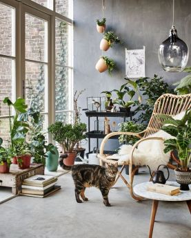 Cat with Fake Plants