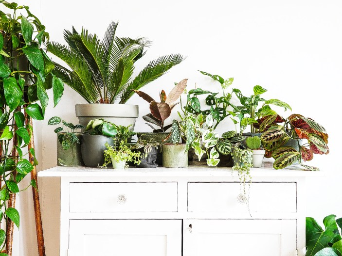 Houseplants & How Not to Kill Them!