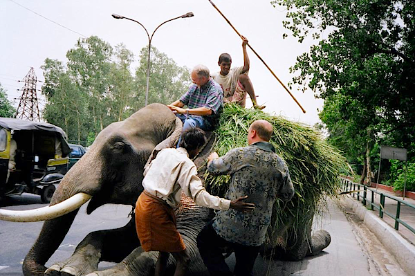 Mike Evans and Billy Chaney attempt to ride an elephant in India