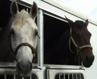 PMZee Horses