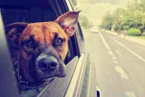 A Guide To Vacation With Your Cat Or Dog