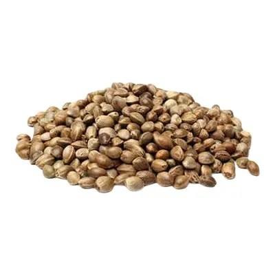 scottsdale marijuana seeds