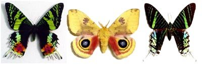 Real Framed Moths From Around The World