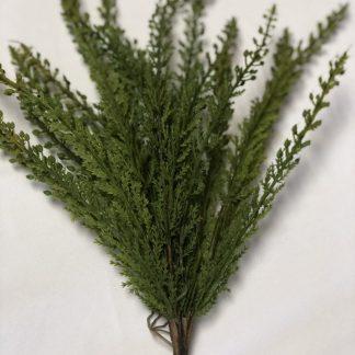 Cedar Bush