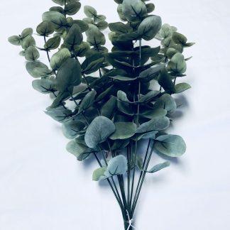Natural Eucalyptus Bush