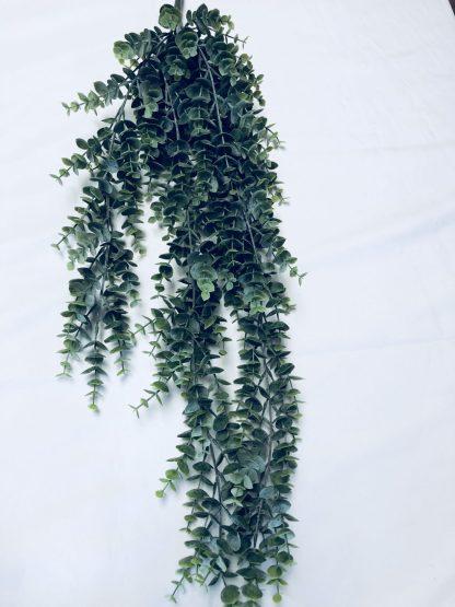 Eucalyptus Hanging Bush