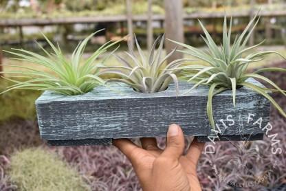 Handcrafted Wooden Cedar 3-hole planter