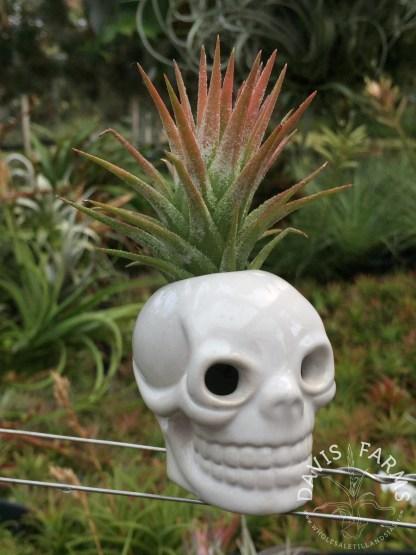 Halloween white skull ceramic