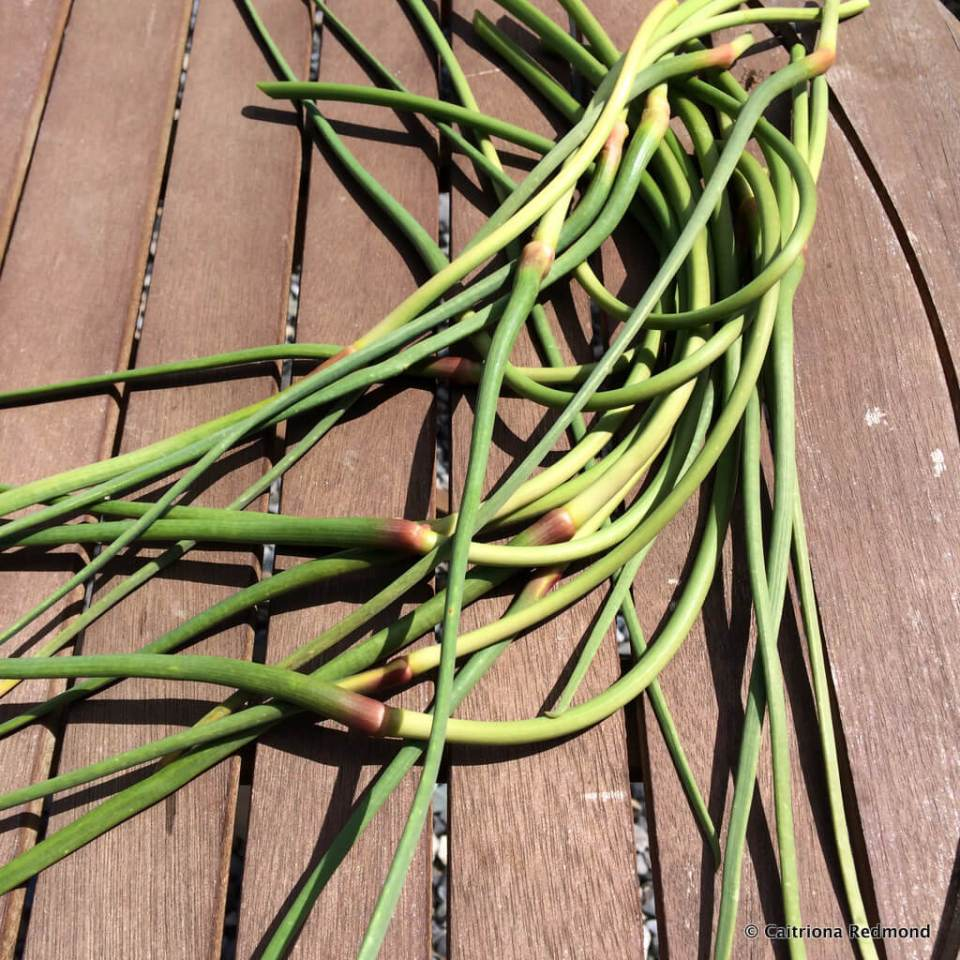 Garlic Scapes - Caitriona Redmond