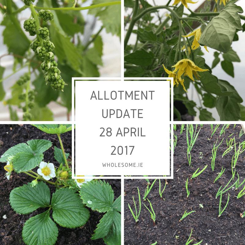 Blog & Allotment Update 28 April 2017