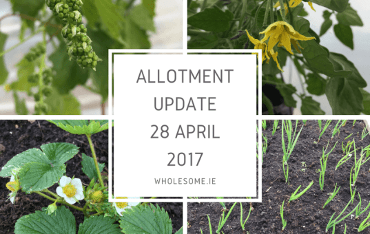 Blog & Allotment Update 28 April 2017