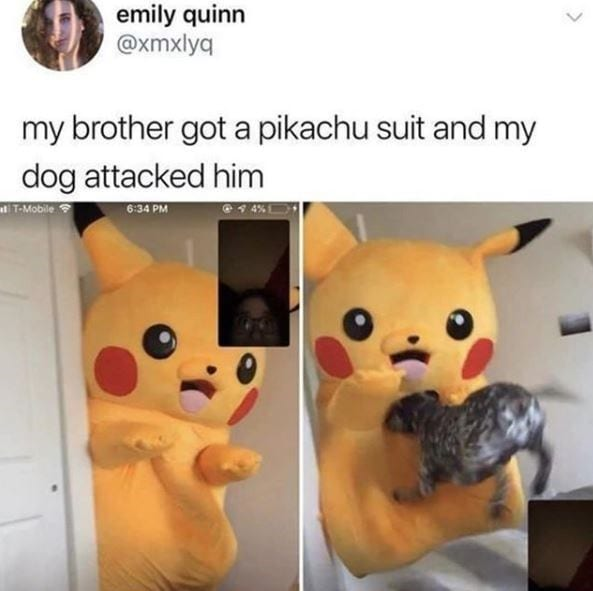 Dog flying into a person dressed up as Pikachu.